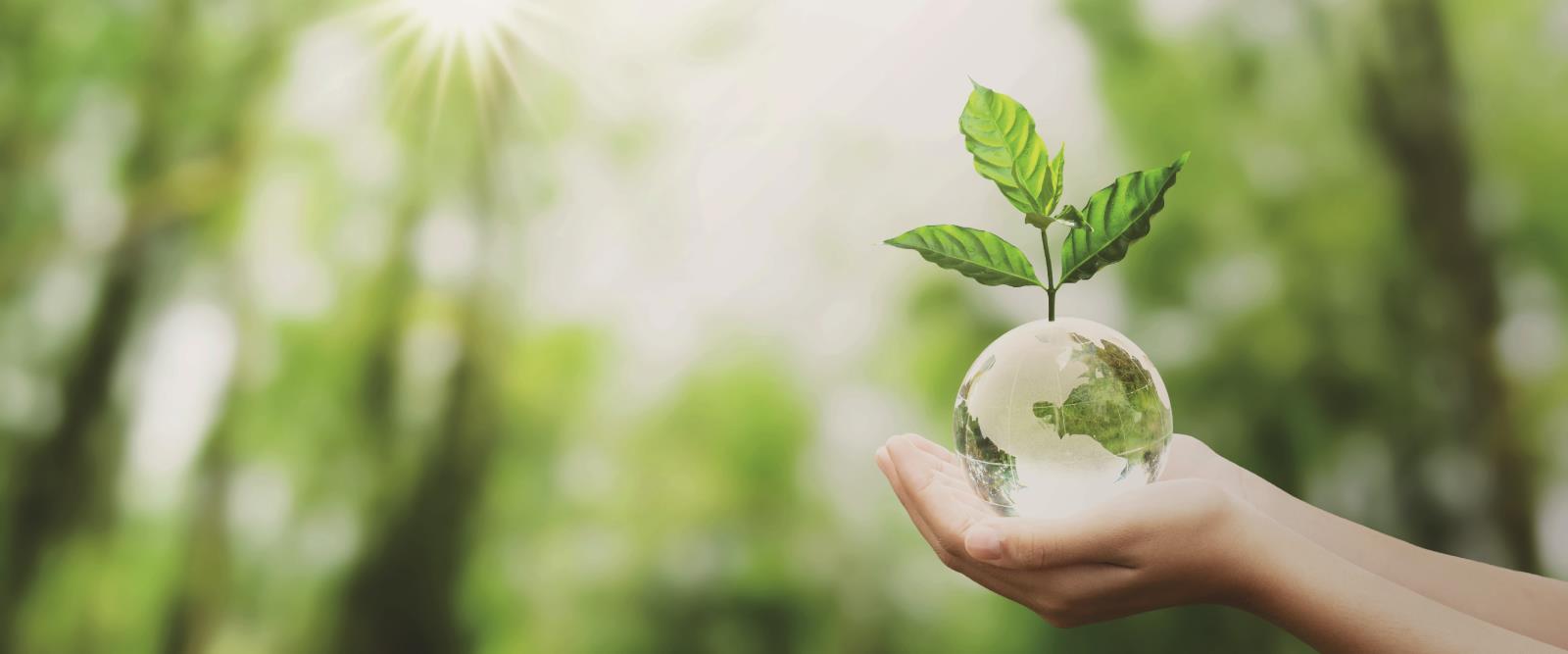 Dünya Çevre Günü'nde Doğa ve Biz…